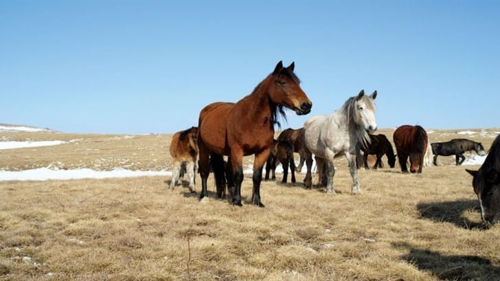 Photo Safari Wild Horses